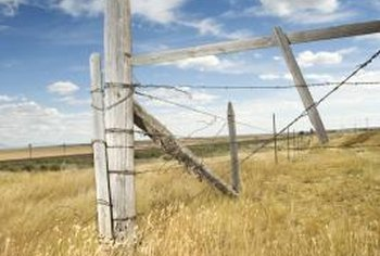 Untreated wood fence posts are extremely vulnerable to insect damage.
