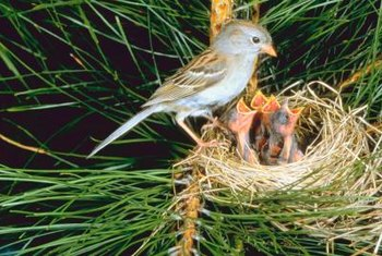 Keep birds' nests out of your grill and in the trees where they belong.