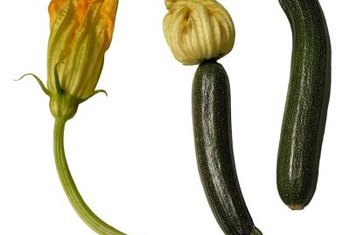 Squash flowers, like the fruits, are edible.