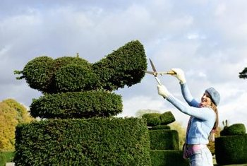 Geometric and animal topiary is popular in formal English gardens.