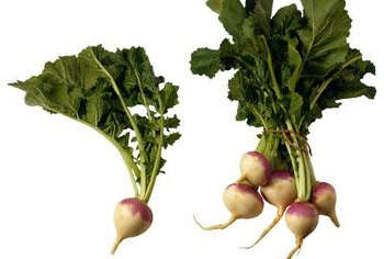 Commonly grown turnips are white with purple tops, but other varieties are available.
