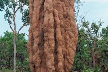 Termites can form large, statuelike mounds if left untreated.