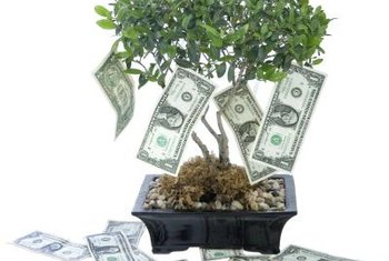 "Money can ""grow on trees"" if you know what to plant."