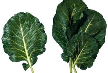 Collards prefer the cooler temperatures in fall and winter.