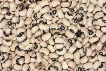 Navy beans are nutrient-rich foods that can help you lose weight.