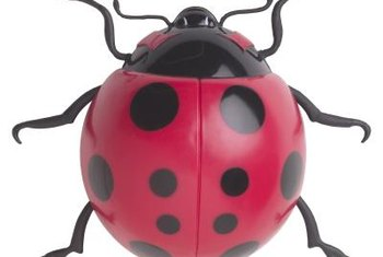 Ladybugs are natural predators of aphids and can be introduced into a greenhouse.