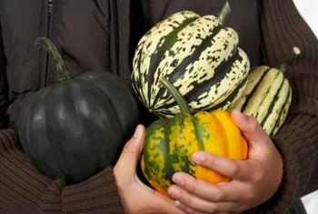 Acorn squash vary in color from ivory to dark green.