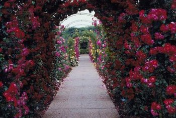 Rose arbors are an elegant way to frame a view or dress up a garden.