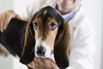 Companion animal veterinarians treat pets.