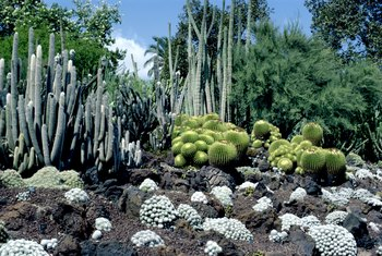 In the right conditions, it's easy to propagate cactus outdoors.