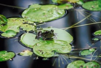 Floating plants provide shelter for aquatic wildlife in your pond.