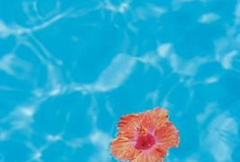 Hibiscus plants do drop a few flowers, but they don't create a big mess around the pool.