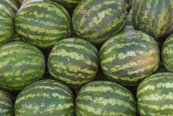 The sweetest watermelons grow over a long, warm summer.