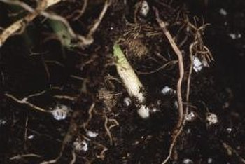 Microorganisms naturally found in healthy soil produce nitrogen that plants need to survive.