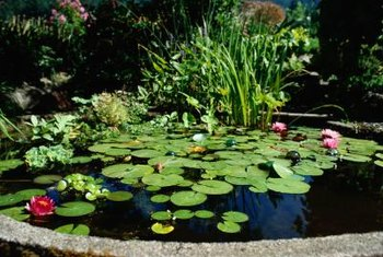 Flowering pond plants attract beneficial insects such as butterflies and bees.