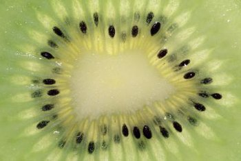 Arctic, or hardy, kiwis propagate easily from cuttings and seeds.