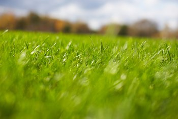 Grass needs at least four hours of sun per day.