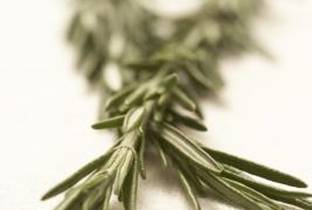 Rosemary can grow up to 4 feet tall and wide.