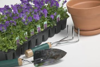 Plant sweet violet seeds or purchase transplants at a garden center.