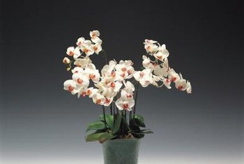 Repot your orchid only when necessary.