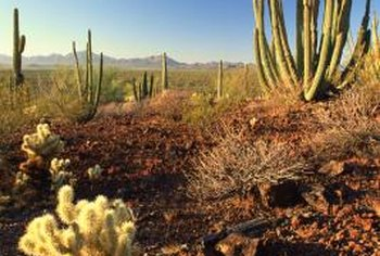 An outdoor cactus prefers a mineral-rich soil that is well-draining.