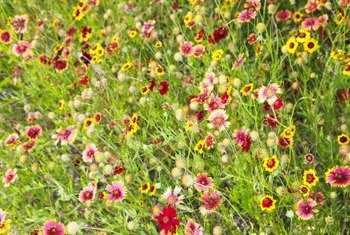 Planting native plants and wildflowers means you no longer have to water, fertilize or weed a front lawn.