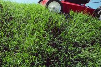 A lawn care schedule is key to a healthy lawn.