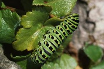 Caterpillars are among the many arthropods Sevin helps control.