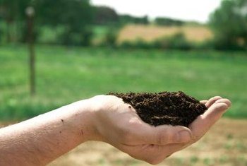 Many growing media we call soils are actually soil-less mixes of other ingredients.