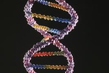 DNA extracted from cells is used in a number of important applications.