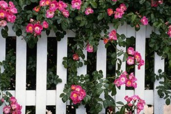 A picket fence is an ideal backdrop for a cottage garden.