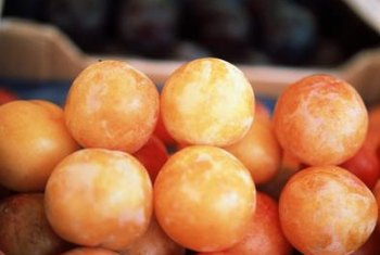 "The yellow flesh of ""Mirabelle"" plums is good for jams and jellies."