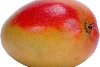 Ripe mangos are characterized by fruity aroma at the stem and gentle yielding when pressed.