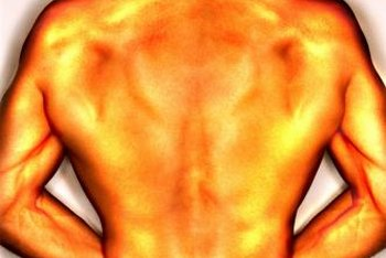 Use multiple back exercises for lat development.