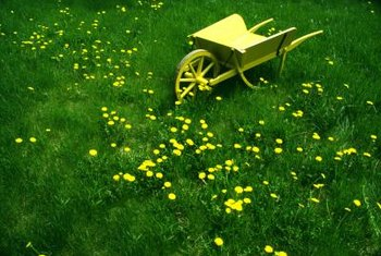 Dandelions are a common type of weed found in yards and flower beds.