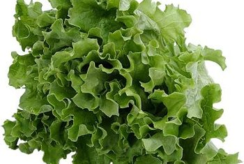 Leaf lettuce is easy to grow in a hydroponic system.