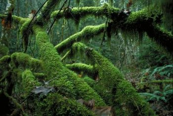 Mosses are the most primitive land plants.