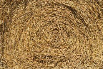 Fresh hay is usually green and finer in texture than straw.