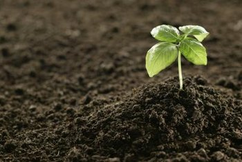 Healthy soil is key to growing healthy plants.