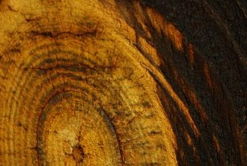 Those tree rings are made of old secondary xylem.