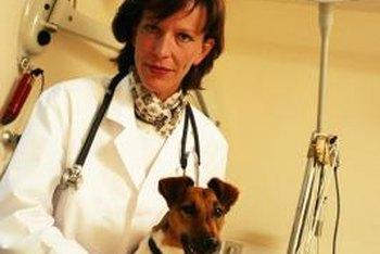 Keeping the veterinary clinic clean safeguards animals' health.