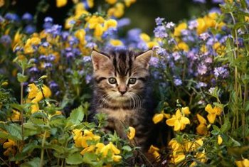 Your kitty enjoys playing in the garden as much as you do.