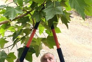 Long-handled loppers are ideal pruning tools for branches up to 1 3/4-inch thick.