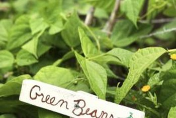 Brown spots on green bean plants signal an infection.