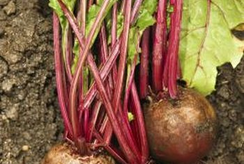 Turnips prefer soil rich in organic matter.