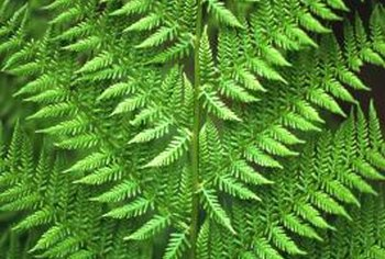 Fern leaves are called fronds.