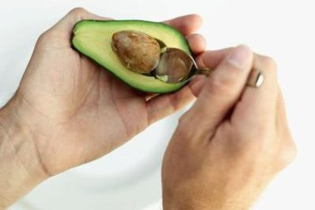 Select potting seeds from fully ripened avocado fruits.