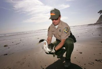Game wardens work to protect wildlife and the environment.