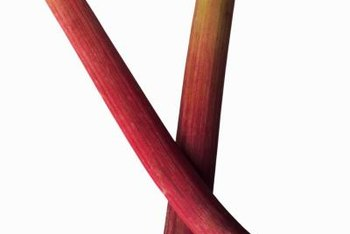 Rhubarb stalks are the only edible part of the plant.