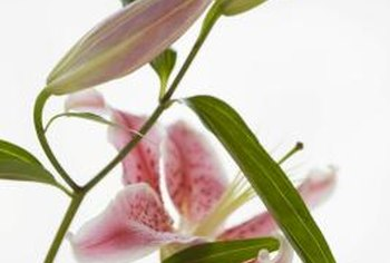 Orchids can add a delicate pop of color to your garden or floral arrangement.